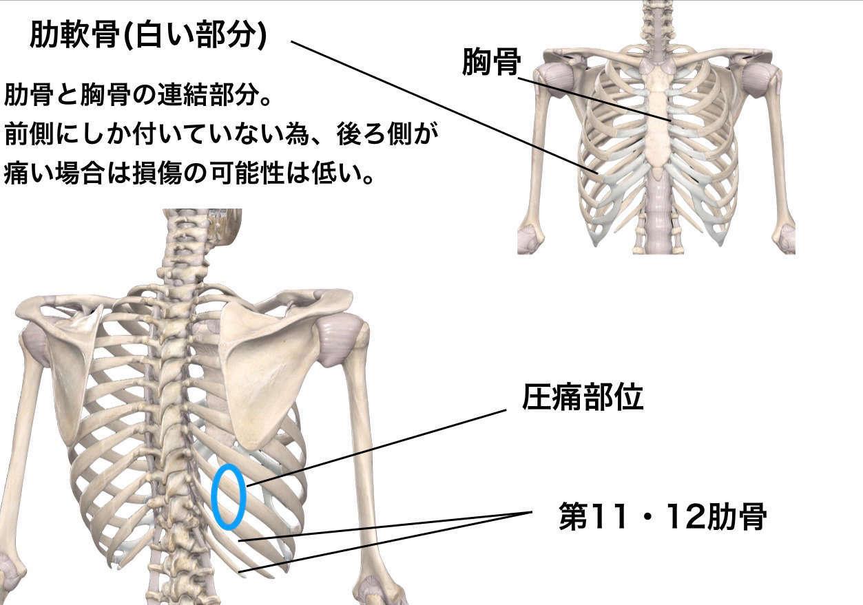 症状 肋骨 ヒビ 肋骨にひびが入った時の症状をチェック!運動は厳禁?