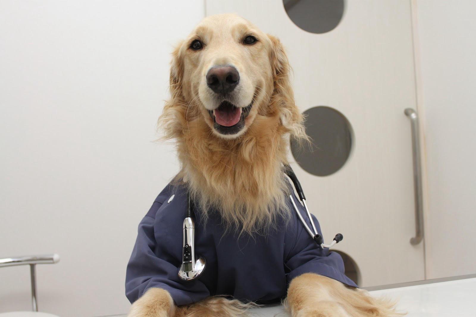 ご り 動物 病院